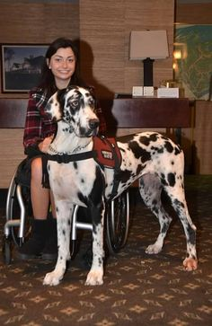 Service Dog Project Photos & Videos  This says it all
