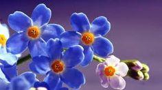 Resultado de imagen para flores muy coloridas en hd