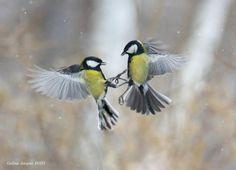 """500px / Photo """"Snowy Waltz ..."""" by Galina Jacyna"""