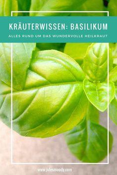 Alles Wissenwerte über Basilikum Als Heilkraut!