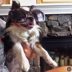 Hope everyone is enjoying this beautiful day!   #vertmontperfumery  #healthy #organic #wellness #smallbatch #handmade #essentialoils #plantbased #perfume #luxury #vegan #vegansofig #bbloggers #beautybloggers #Etsy #summer #summertime #fresh  #instagood #instabeauty #vermont #labordayweekend #laborday #dogsofinstagram #dogs #puppy #love