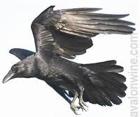 crows and ravens - Google Search