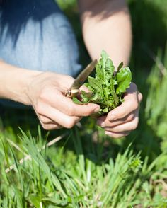 Was wirklich wichtig ist beim Kräuter sammeln und ein großer Sammelkalender für heimische Heilpflanzen.