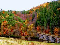 A most beautiful autumn sight near Neidpath Castle Peebles Scotland