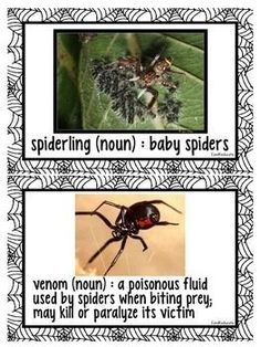 Nonfiction Spider Research and Investigation by EandKeducate | Teachers Pay Teachers