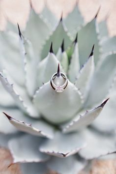 Beautifully Detailed Arizona Wedding from Pinkerton Photography - engagement ring