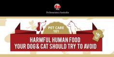 10 pet care tips: Harmful human food your pet should try to avoid