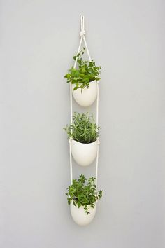 Ceramic Wall Planters by Light   Ladder