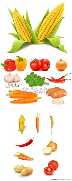 3 green vegetables vector map