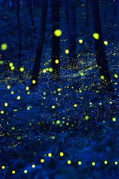 Fireflies-Lightbugs An amazing animal, an impressive part of nature #Tiny #Forest #Lightbug