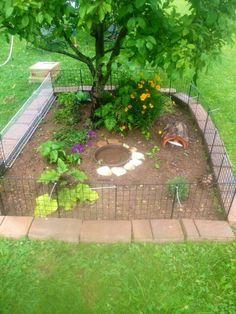 Turtle outdoor enclosure                                                                                                                                                     More