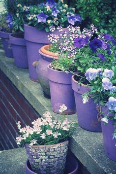 Purple garden pots