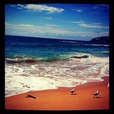 Sunny Sunday @ Palm Beach Australia
