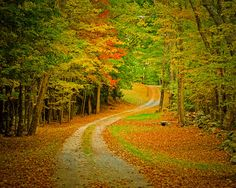 Autumn Photography Fall Colors Photo Road by DeepLightPhotography, $30.00