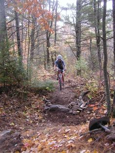 Chequamegon Area Mountain Bike Association