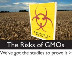The Risks of Genetic Engineering and Genetically Modified Organisms: A shopping list of GMO free products