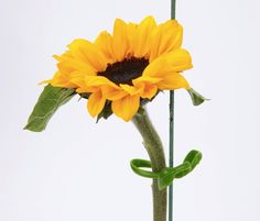 How great does this look?    http://globalgardenfriends.com/store/products/ultimate-plant-clips/