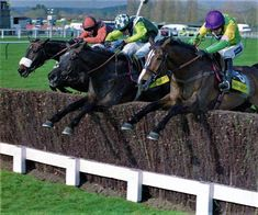 The greatest chase of the Century Three Gold Cup winners in the air together: Long Run - Denman- Kauto Star Anaglogs Daughter ( Horse Racing Books, Race Horses, Sport Of Kings, Gold Cup, Horse Breeds, How To Run Longer, Equestrian, Riding Helmets, Daughter
