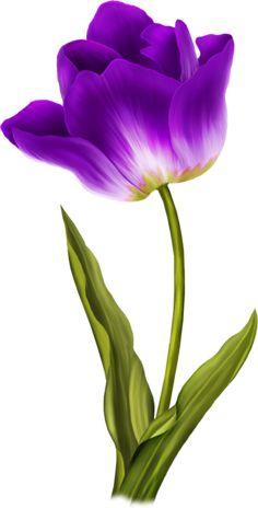 Tulip PNG image - world of flowers Tulip Painting, Fabric Painting, Tulip Drawing, Painting Flowers, Watercolor Flowers, Watercolor Paintings, Art Floral, Flower Wallpaper, Amazing Flowers