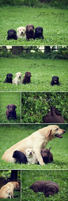 Doggie family...great photography