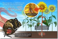 Neonicotinoids: The New DDT? Be informed and chooses not to use this poison!