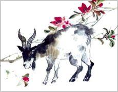 Chinese Zodiac Sheep Information.
