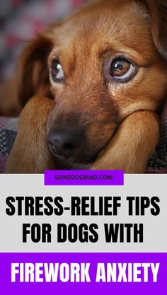 Although we may enjoy the explosive lights of fireworks season, most dogs don't. In fact for most unassuming pups, fireworks are deeply distressing and can cause them to behave unpredictably.  So if you know your dog gets anxious during fireworks, here are a few stress-relief tips to ensure your dog stays safe and out of harm's way.  #DogSafety #DogHealth #DogBehaviour #DogSafetyTips #DogStress #DogAnxiety #DogHealthTips #DogOwnerTips