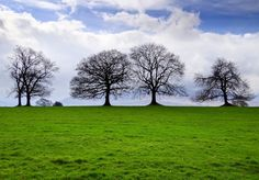 Naked trees in Ireland.