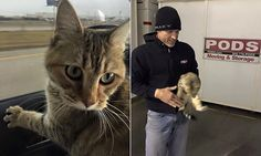 Cat survives three weeks locked in storage pod with no food or water. Pods Moving And Storage, Storage Pods, Cat Names, Survival, Cats, Animals, Food, Gatos, Animales