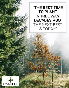 Environmental Quotes: Go Green Sustainable Messages - OwnMuse Native American Proverb, Rudolf Steiner, Deep Love, Top Quotes, Tomorrow Will Be Better, Mother Teresa, Save The Planet, Go Green, Ecology