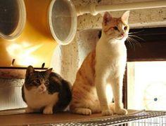 Chicca e Cocco sono chiusi in un piccolo spazio SOLI - http://hormiga.it/chicca-e-cocco-sono-chiusi-in-un-piccolo-spazio-soli/