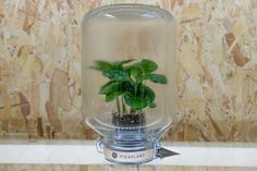 london design festival, london design, pikaplant, pikaplant jar, self-watering plant, biomimicry, house plants, indoor plants, indoor garden, vertical garden