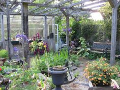 Old garden patio and shed in Courtenay neighbourhood