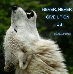 Save the wolves                                                       …