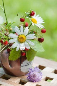 Chamomile & Wild Strawberry
