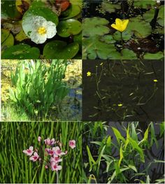 How to Build a Basin Pond to Attract Wildlife