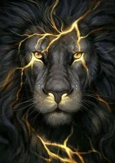 Animals And Pets, Cute Animals, Wild Animals, Lion Wallpaper, Animal Wallpaper, Black Wallpaper, Black Lion, Lion Pictures, Lion Of Judah