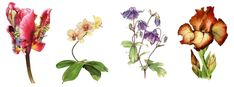 Flower Paintings in watercolour by Tracy Hall