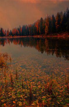 Reflections - On lake