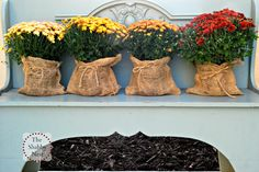 The Shabby Nest: Outdoor Fall Decor (the evolution of this year's display)~wrapped mums in burlap