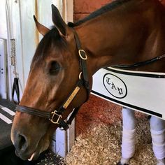 Patch. The one-eyed possible contender for the 2017 Kentucky Derby