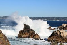 Point Lobos  Carmel, CA