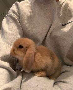 Baby Animals Super Cute, Cute Baby Bunnies, Pretty Animals, Cute Little Animals, Cute Funny Animals, Cute Dogs, Cute Bunny Pictures, Baby Animals Pictures, Cute Animal Pictures