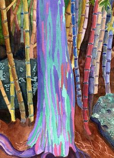 Original watercolor painting of the colorful Rainbow Eucalyptus tree from Kauai Hawaii. I had never seen anything like it before. $85 for original