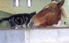 Cat and horse create beautiful friendship (VIDEO)