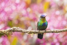 priroda-vetka-ptica-okras.jpg (2048×1365)