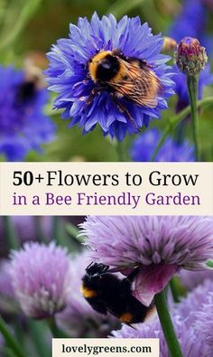 50+ Flowers to grow in a Bee Friendly Garden