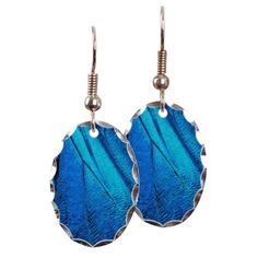 Exotic Blue Butterfly Wing Macr Earring Oval Charm