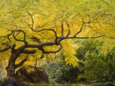 lithia-park-ashland-oregon.jpg Photo by Robert Finkelstein