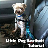 Little Dog Seatbelt Tutorial